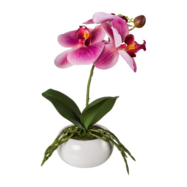 Phalenopsis In Ceramic Bowl,27 cm, Fuchsia, Real Touch