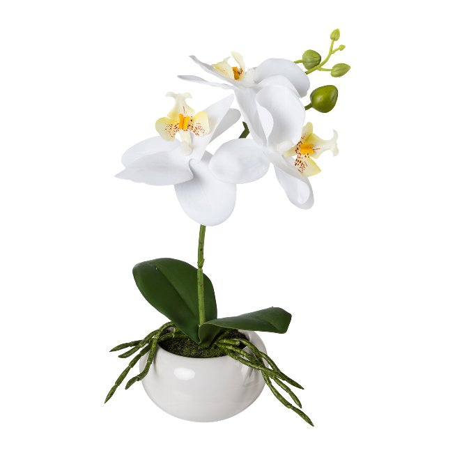 Phalenopsis In Ceramic Bowl,27 cm, White, Real Touch
