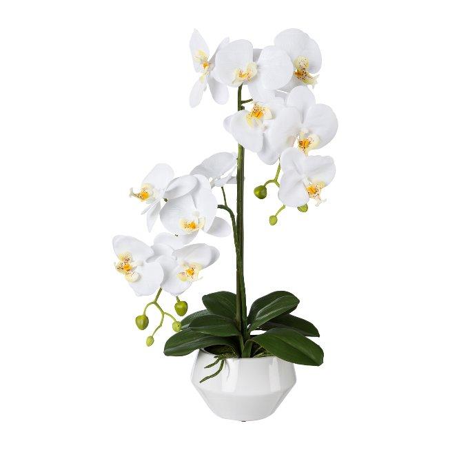 Phalenopsis In Ceramic Pot, 52,cm, White, Real Touch