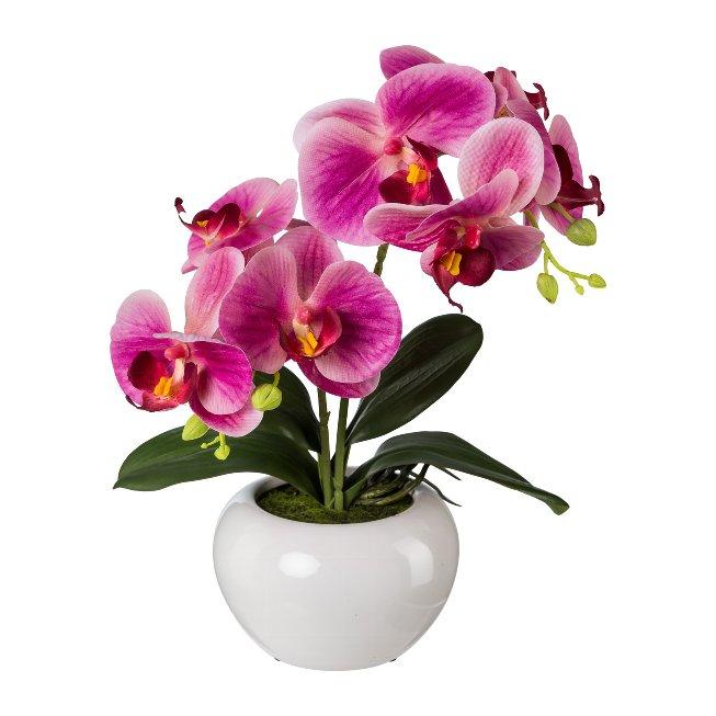 Phalaenopsis in Keramiktopf