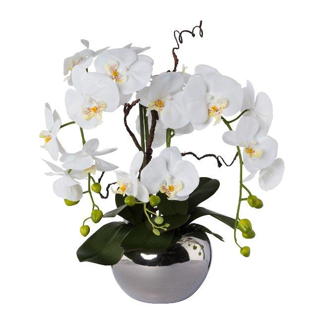 Phalaenopsisarrangement im Silbertopf