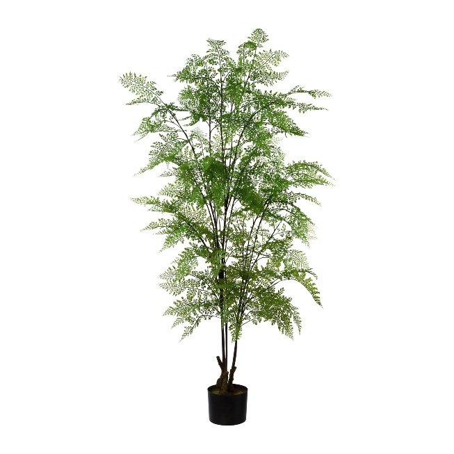 Adianthum in pot, 127 cm
