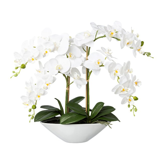 Phalenopsis In Ceramic Bowl,Real Touch, 53 cm, White,