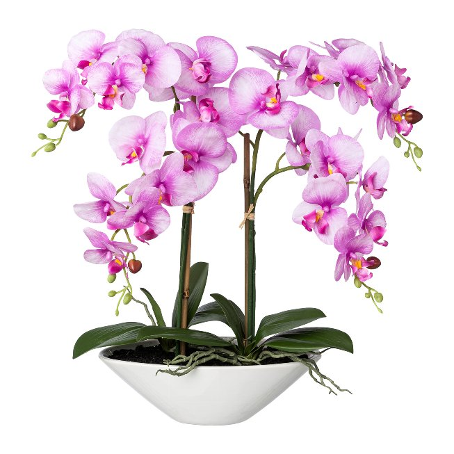 Phalenopsis in Keramikschale Real touch