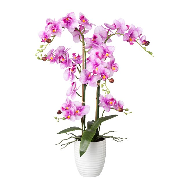 Phalaenopsis Real touch