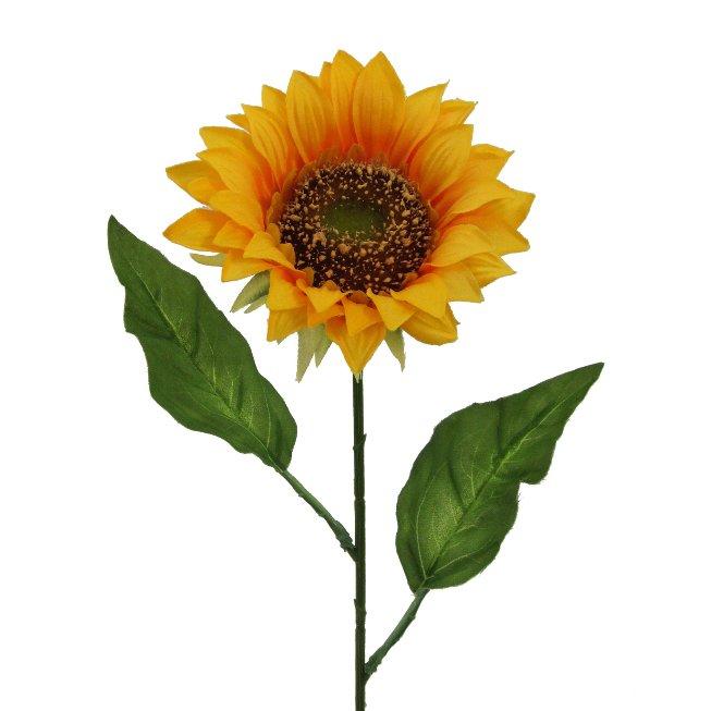 Sonnenblume DM 11cm