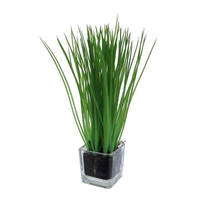Grass in glass 5 x 5 cm, 23 cm, set of 2