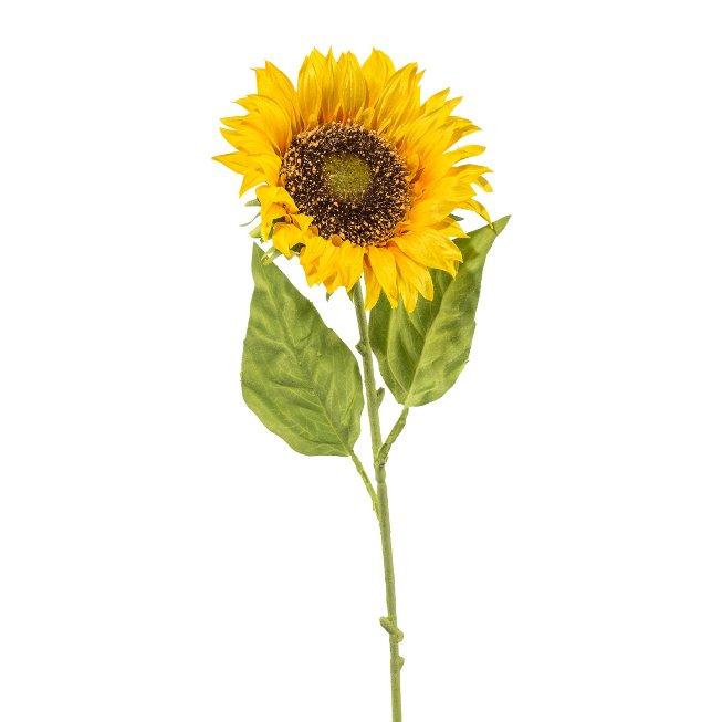Sonnenblume DM 13cm