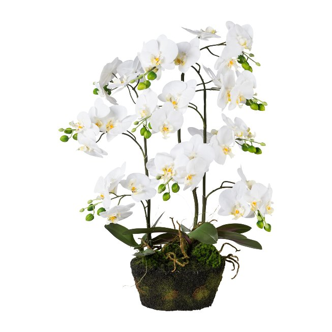 Phalenopsis In Moss, 70 cm,White, Real Touch