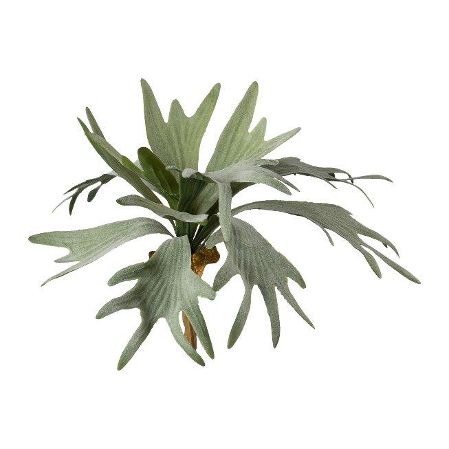 Staghorn fern, 35 cm