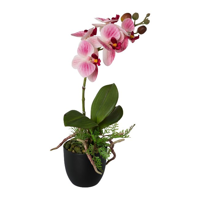 Phalenopsis In Pot, 35 cm,Pink, Real Touch