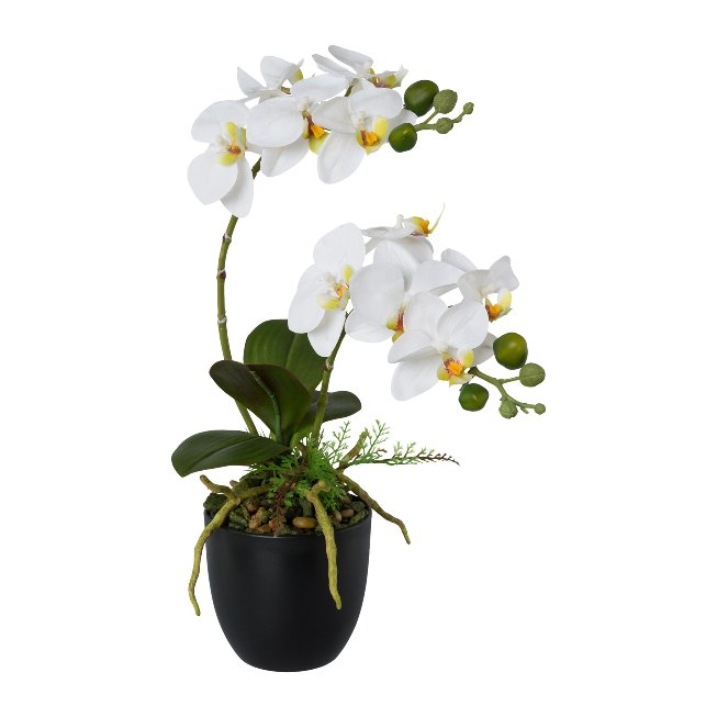 Phalenopsis In Pot, 42 cm,White, Real Touch