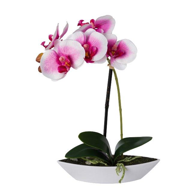 Phalaenopsis in Schale oval