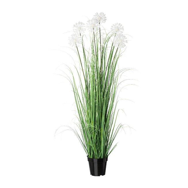Dandelions in pot, 128 cm