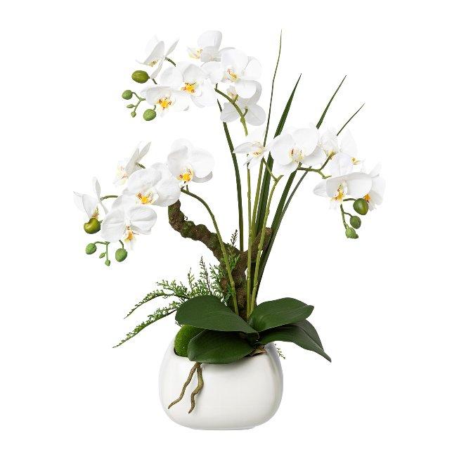 Phalenopsis In Ceramic Pot, 46,cm, White