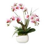 Phalaenopsis im Keramiktopf
