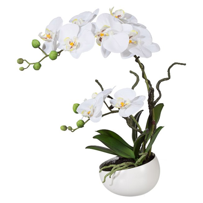 Phalaenopsis in Dekokeramikschale