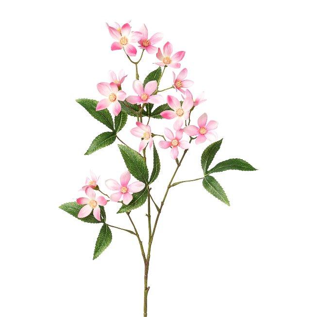 Ceratopetalum Branch, 70 cm,Pink