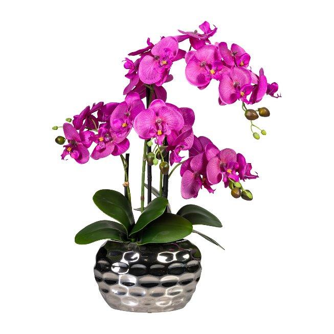 Phalaenopsis x4