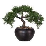 Bonsai Cedar, ca. 26 cm, In,Ceramic Pot Black Ø15 cm,