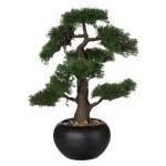 Bonsai Cedar, ca. 48 cm, In,Ceramic Pot Black Ø18 cm,