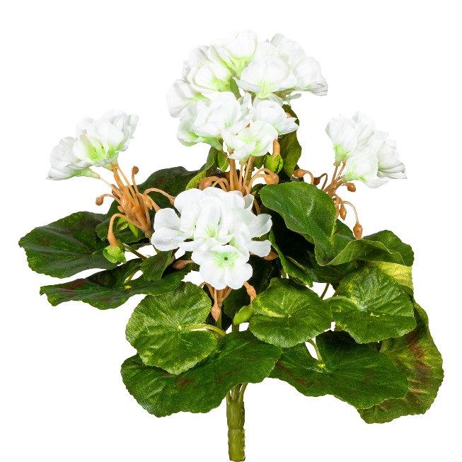 Mini Geranium x7, ca. 24 cm, 5,Flowers, White, Uv-Resistant