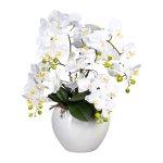 Phalaenopsis, 56 cm, White, In,Ceramic Pot White Dm24x20 cm,