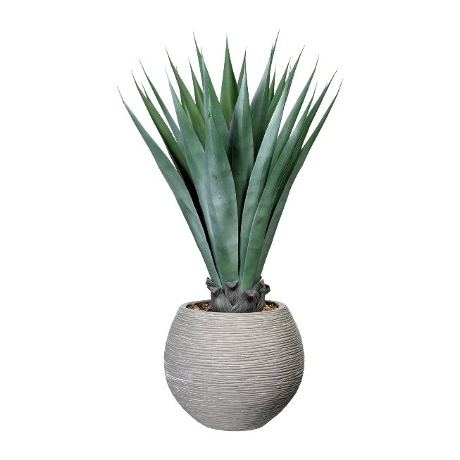 Agave x26, ca. 105 cm, Green,In Cement Pot 33x38 cm Grey