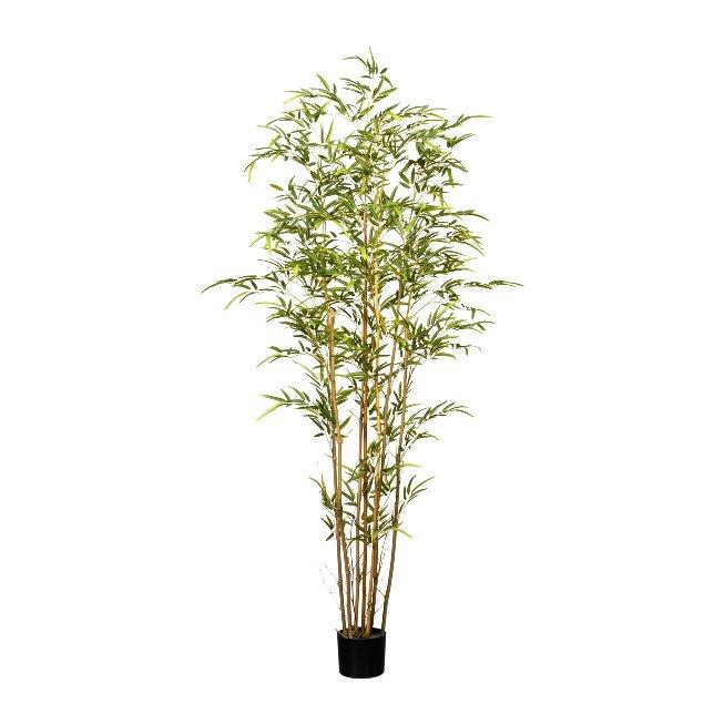 Bambus x7