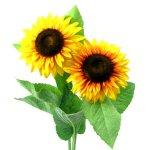 Sonnenblume 6/Poly dm12cm