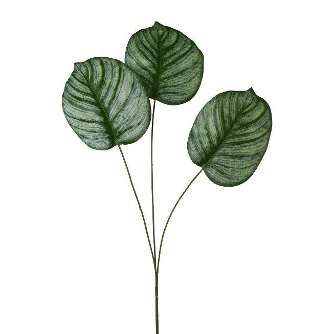 Calathea leaf x 3, 72 cm, set of 2