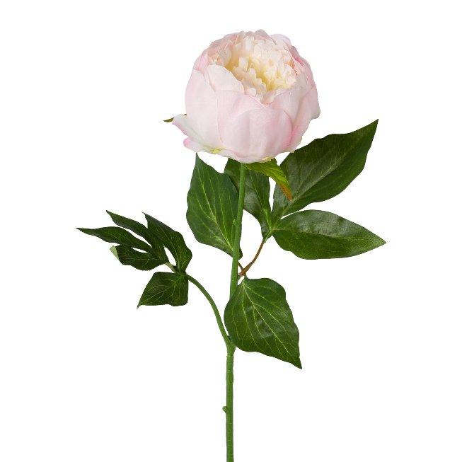 Peonie, 58 cm, pink