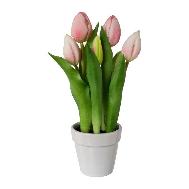 Tulpen im Keramiktopf x 5