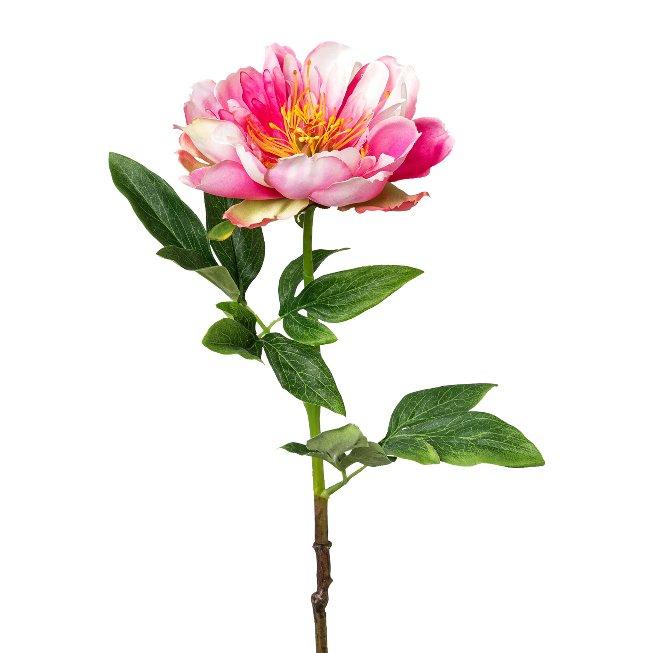 Peonie, 51 cm, pink