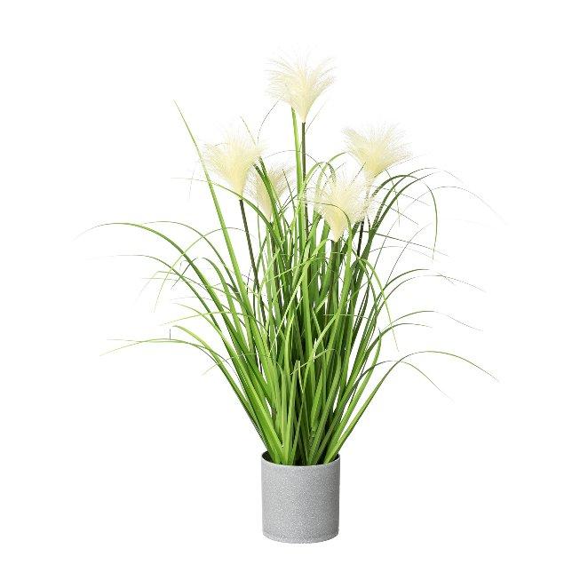 Sedge in pot, 66 cm