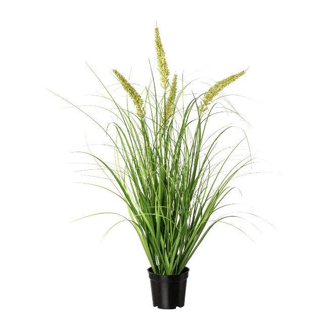 Penisetum in pot, 71 cm