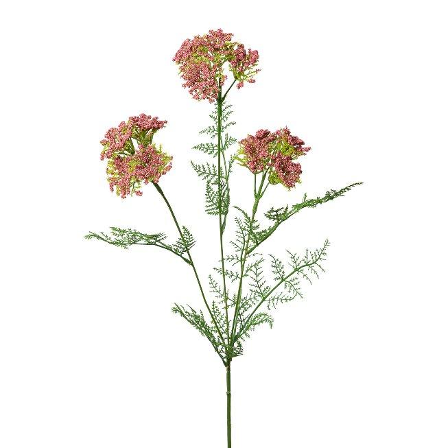 Achillea, 57 cm,old pink, set of 2 pcs