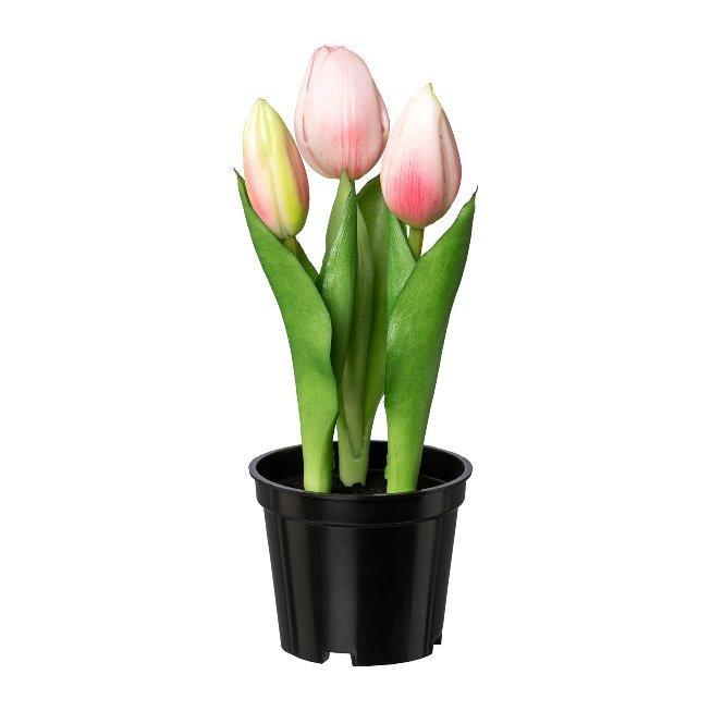 Tulip x 3 In Pot, 20,5 cm,Pink