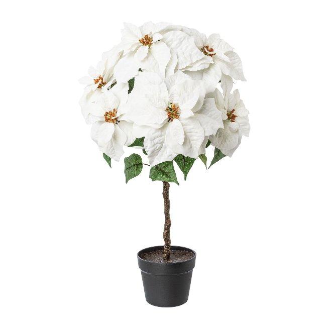 Poinsettia stem x 7,velvet,75 cm,white
