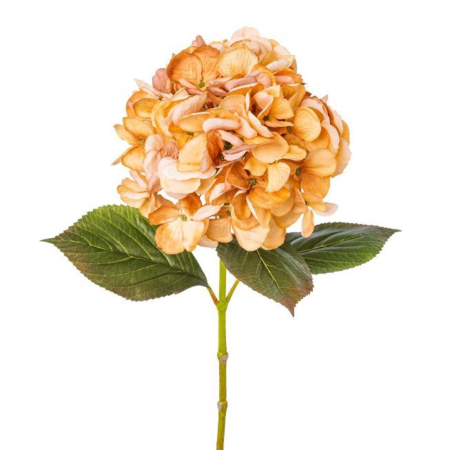 Hydrangea, 65 cm, apricot