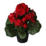 Geranium in pot, 24 cm, red