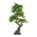 Ficus Benjamini, ca. 170x80 cm,Green, Trellis, Plastic, Trunk