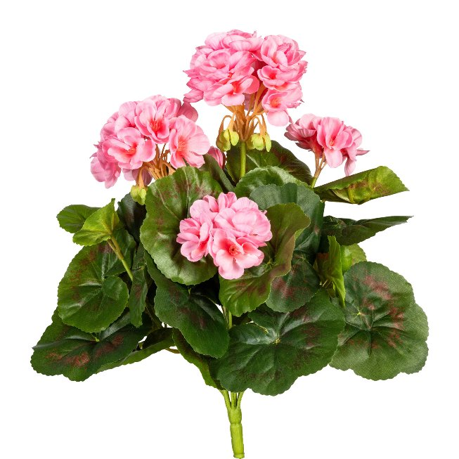 Geranium Bush x7, ca. 32 cm,Pink