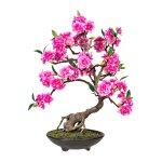 Bonsai Cerasum, Pink ca. 50,cm, In Cement Bowl Brown 20x6