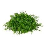 Mixed Grass Hemisphere ca.,34x16 cm, Plastic, Green
