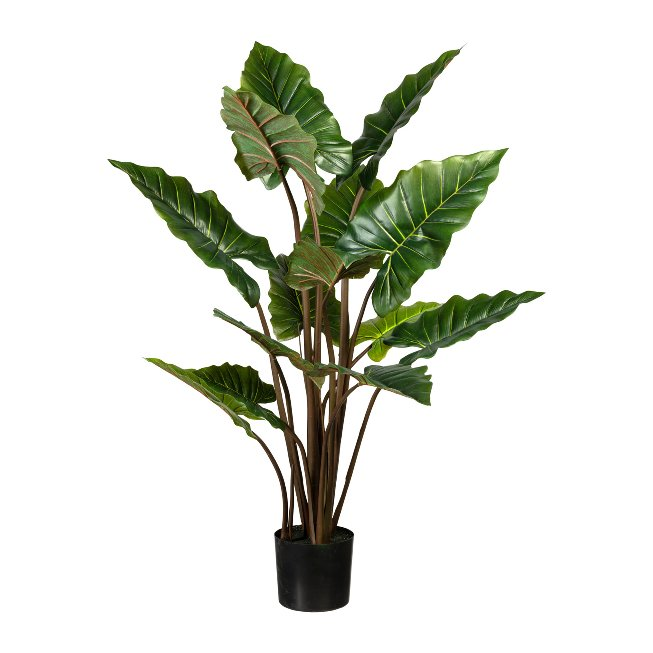 Taropflanze x14