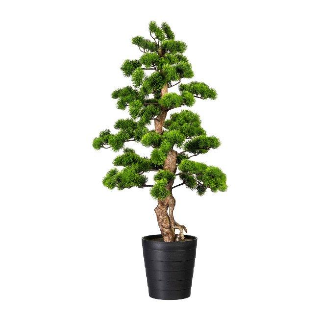 Bonsai Kiefer ca 110x50cm