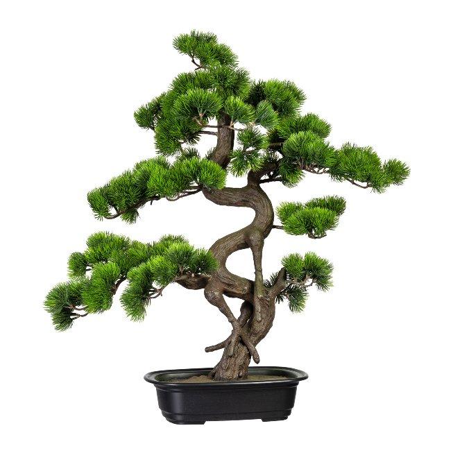 Bonsai Pine ca. 65x50 cm, In,Plastic Bowl 27x19x4 cm,