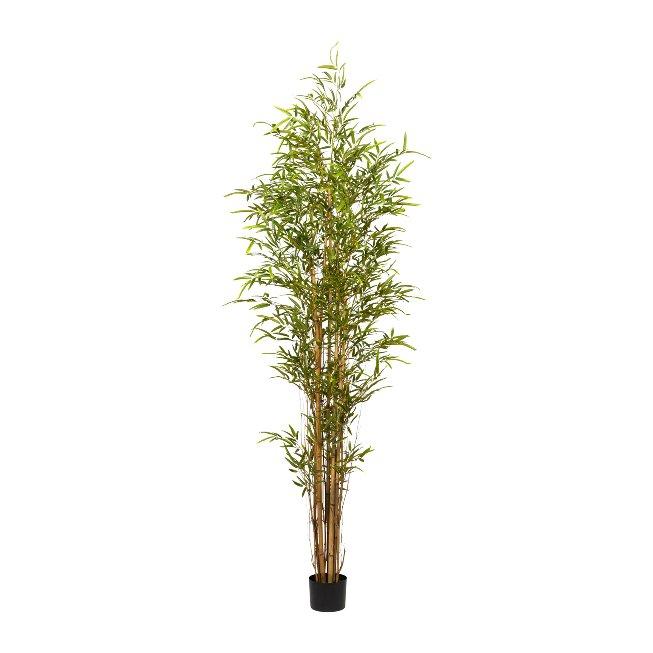 Bambus x 8