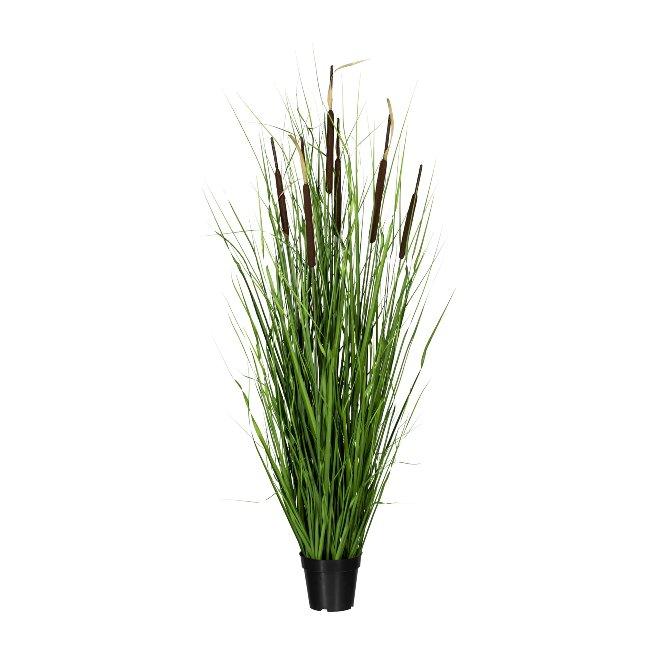 Grass Bush With Reed-Butt x7,ca. 150 cm, In Pot 15x17 cm